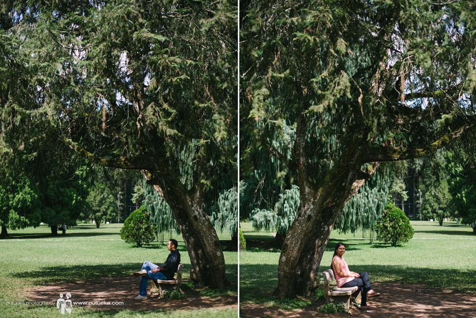 Feel the breeze under Botanical Garden big trees