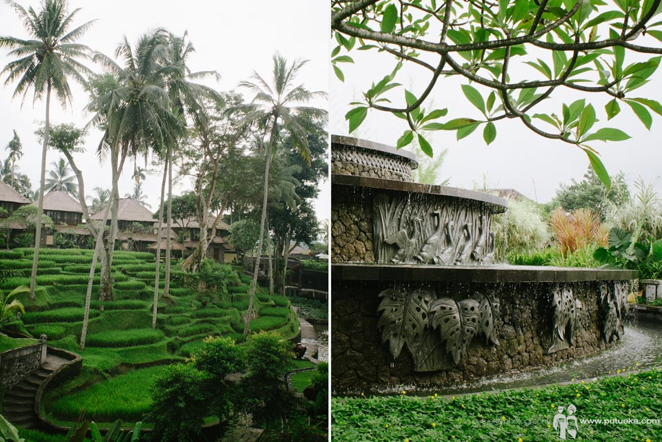 Water fountain blending seamlessly with green lush rice terrace of Kamandalu Ubud