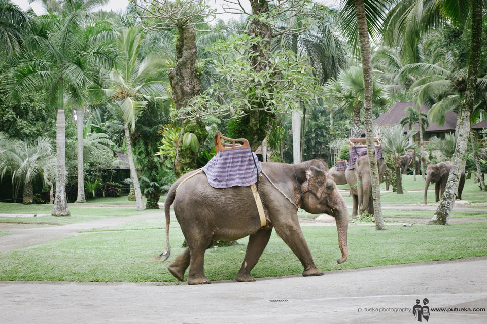 Elephants inside elephant safari area