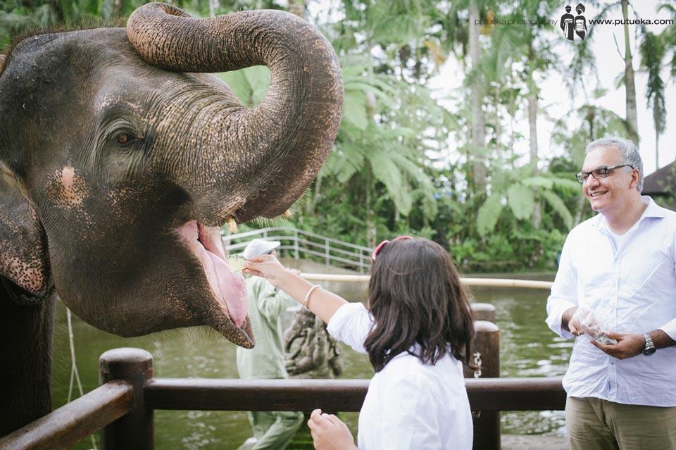 Big sister feeding the elephant
