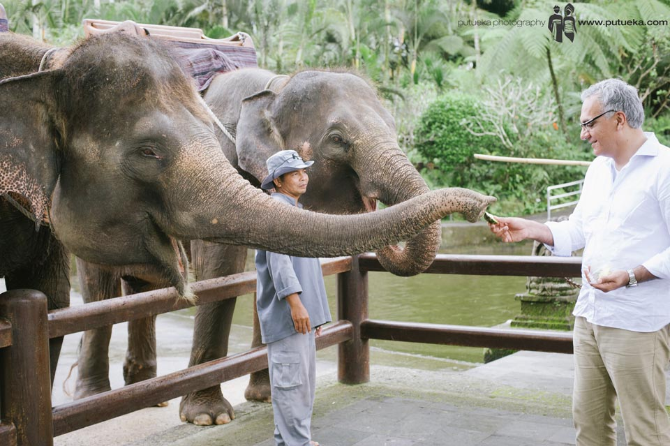 Father feeding the elephant, survey by animal tamer