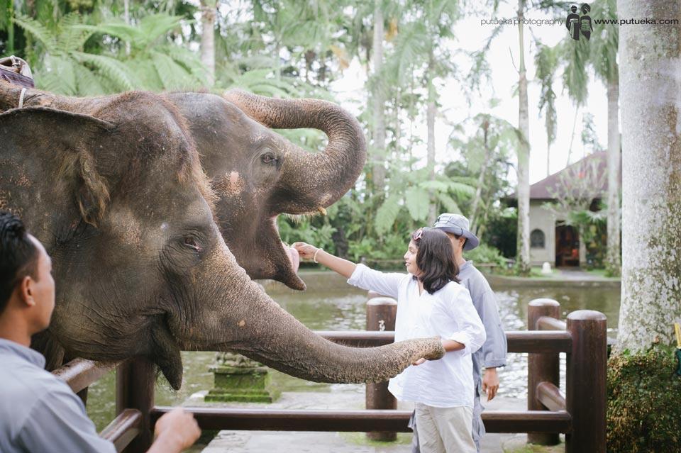 Big sister feeding the elephants one by one