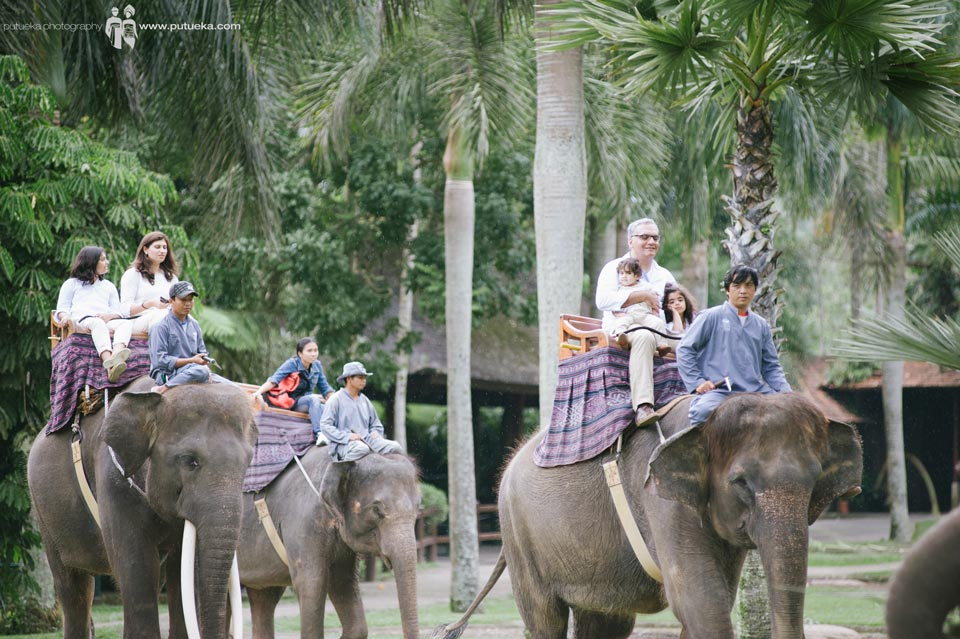 Unforgettable moment of riding elephant at Ubud Bali