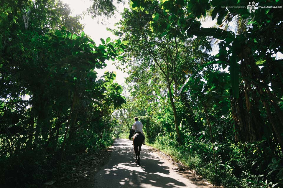 Riding horse in the morning under green lush trees