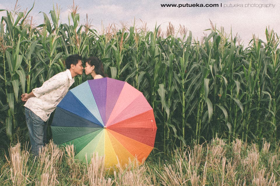 Kissing in front of Bali cornfield