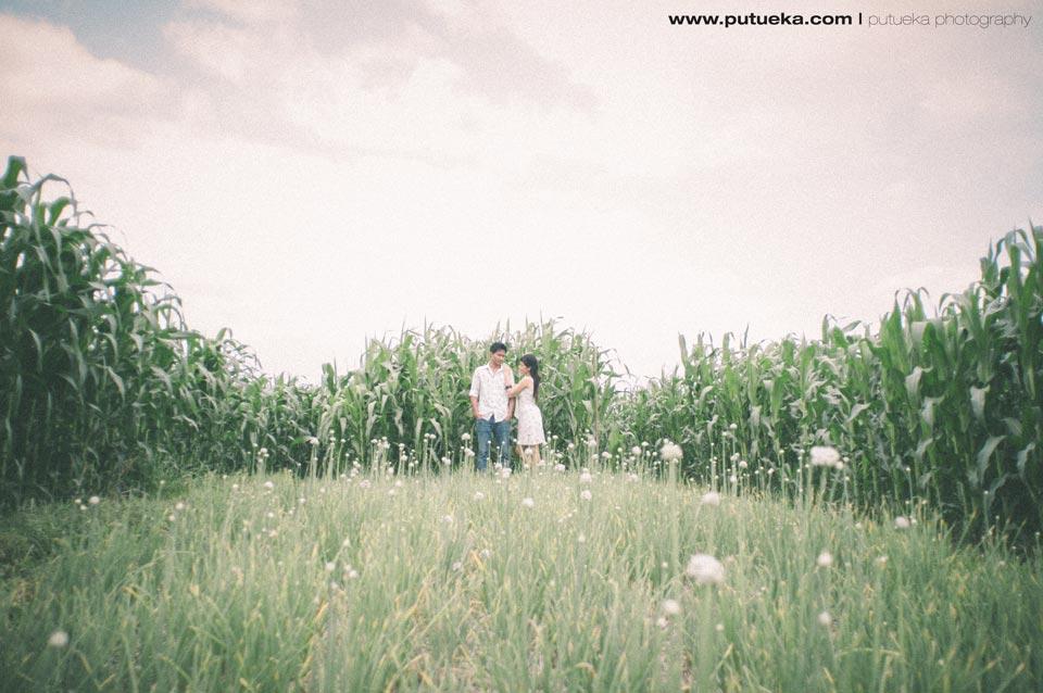 Pre wedding photography session in Tabanan cornfield Bali