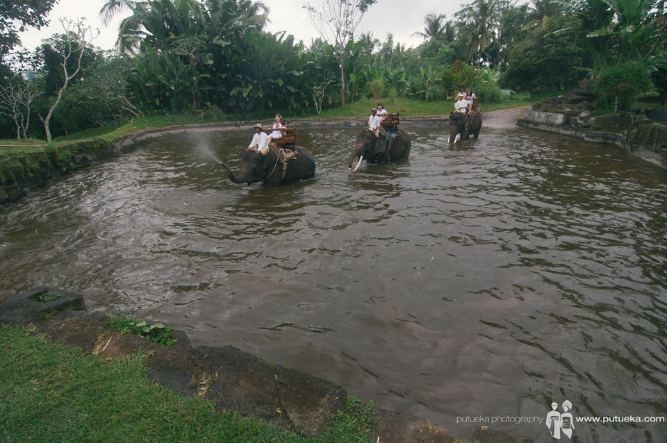 Elephant safari through the pond in Bali